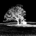 The infamous Devil Tree of Liberty Corner