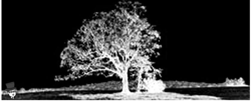 The Devil Tree by Mr. Local History