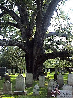 Basking Ridge Oak Tree - Mr Local History