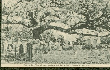 Basking Ridge Oak Tree c1912