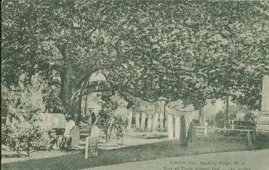 Basking Ridge Oak Tree c.1912