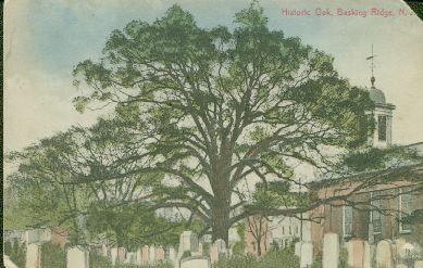 Basking Ridge Oak Tree c1914