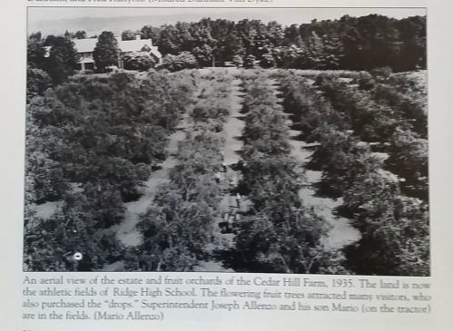 Samuel Owen's Peach Orchards c1935
