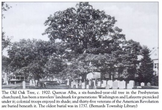The Bernards Township Oak tree c.1920