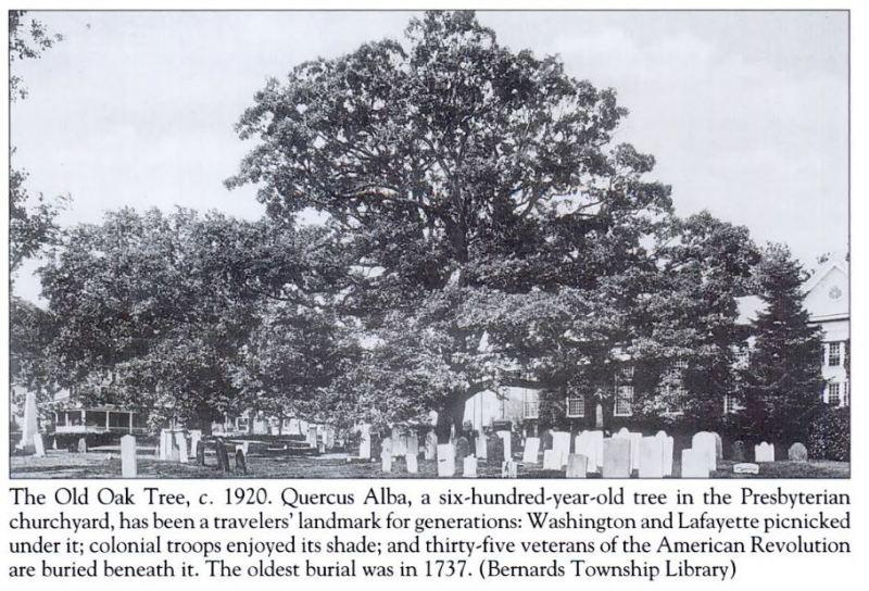 The Bernards Township Oak tree c.1920