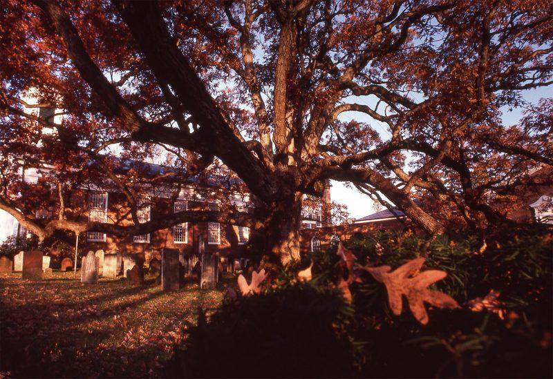 Basking-Ridge-Oak-Tree-Mark-Albright-1982