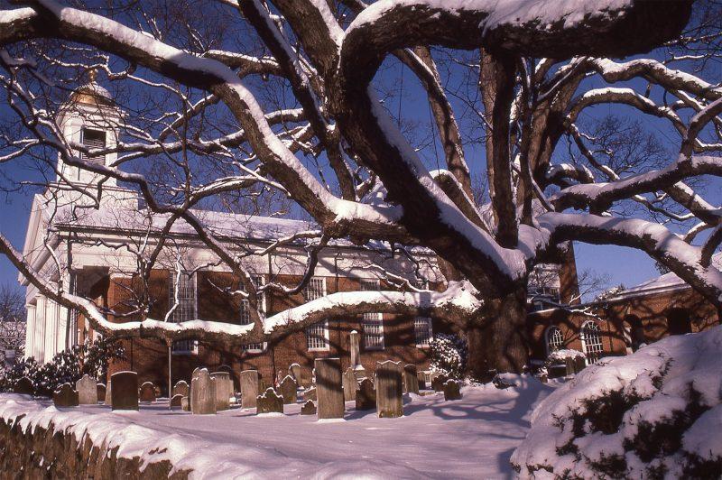 Basking-Ridge-Oak-Tree-Mark-Albright-1985