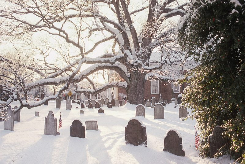 Basking-Ridge-Oak-Tree-Mark-Albright-1993